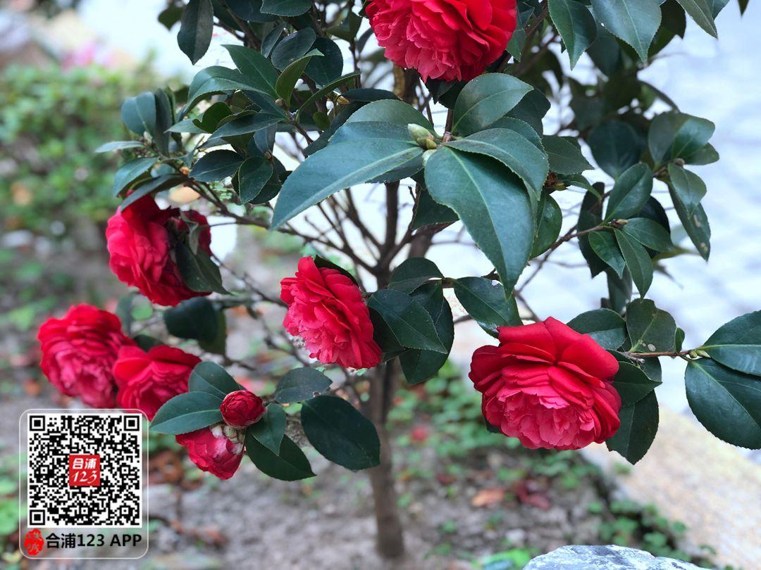 微信图片_20210221114100.jpg