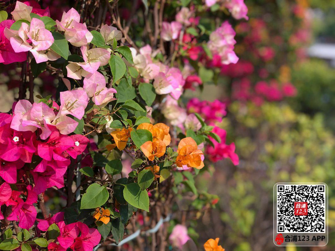 微信图片_20210221114105.jpg